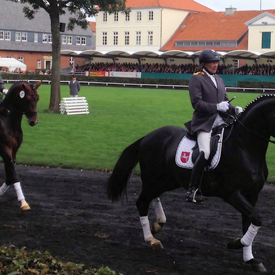 Hengstparade 2012: Hoffnungsträger von morgen (37 Floratio, 24 Don Index)